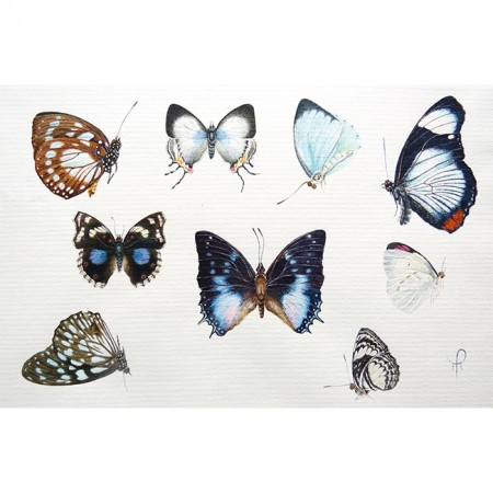 african butterflies blue