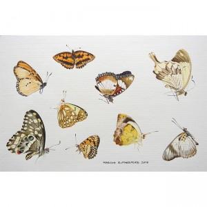 african butterflies yellow