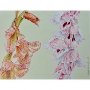 Kipengere wild gladioli - G daleni and G. gregarius