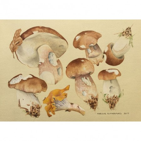 Ceps and chanterelle